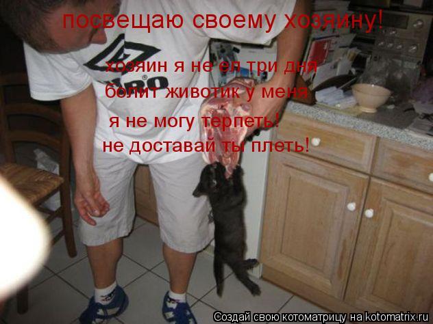Котоматрица: посвещаю своему хозяину! хозяин я не ел три дня болит животик у меня я не могу терпеть! не доставай ты плеть!
