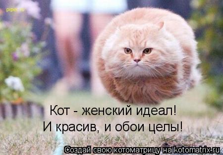 Котоматрица: Кот - женский идеал! И красив, и обои целы!