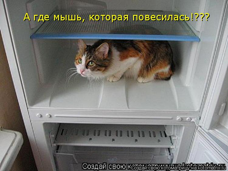 Котоматрица: А где мышь, которая повесилась!???