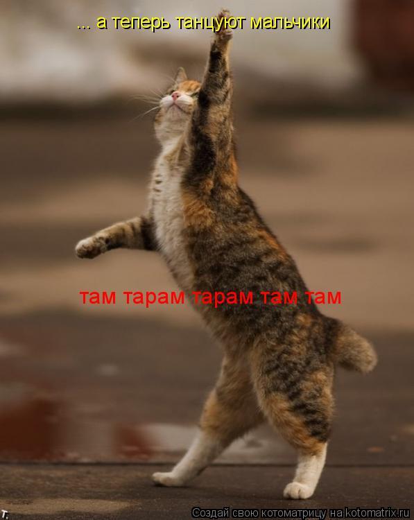 Котоматрица: ... а теперь танцуют мальчики там тарам тарам там там