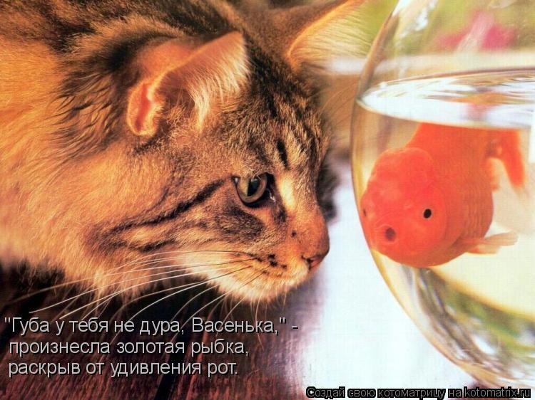 """Котоматрица: """"Губа у тебя не дура, Васенька,"""" - произнесла золотая рыбка, раскрыв от удивления рот."""
