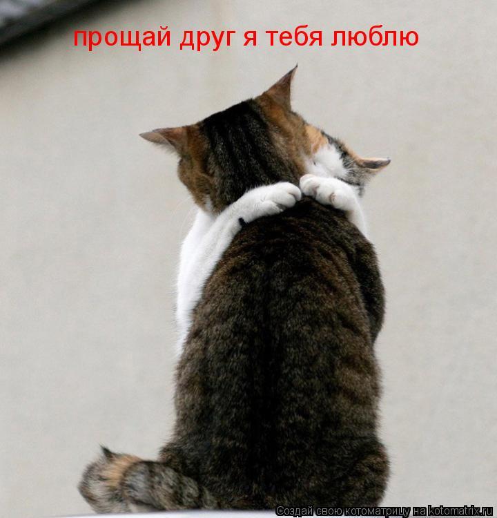 Котоматрица: прощай друг я тебя люблю