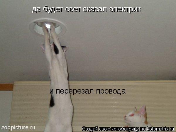 Котоматрица: да будет свет сказал электрик  и перерезал провода