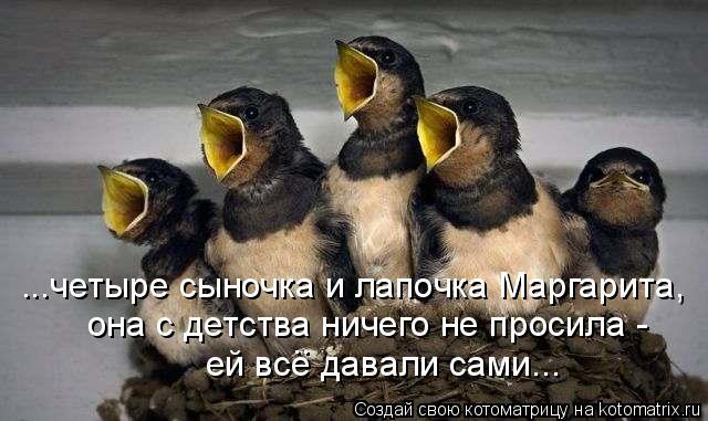 Котоматрица: ...четыре сыночка и лапочка Маргарита, она с детства ничего не просила - ей все давали сами... ..