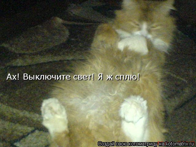 Котоматрица: Ах! Выключите свет! Я ж сплю!