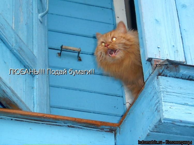 Котоматрица: ЛЮБАНЬ!!! Подай бумаги!!