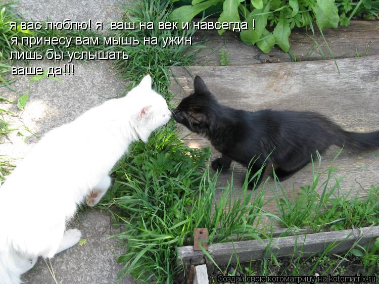 Котоматрица: я вас люблю! я  ваш на век и навсегда !  я принесу вам мышь на ужин лишь бы услышать ваше да!!!