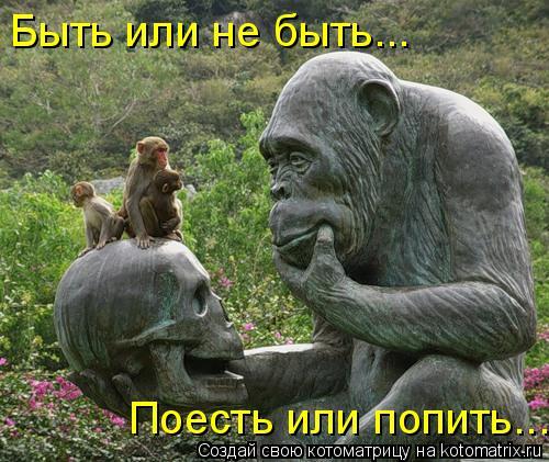 Котоматрица: Быть или не быть... Поесть или попить...