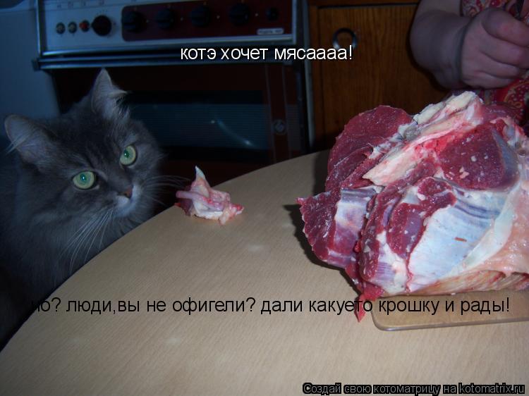 Котоматрица: котэ хочет мясаааа! чо? люди,вы не офигели? дали какуето крошку и рады!