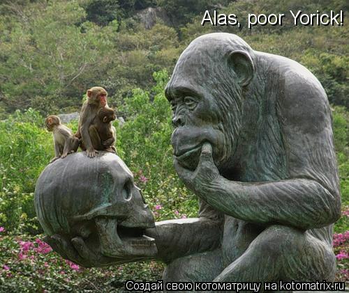 Котоматрица: Alas, poor Yorick!