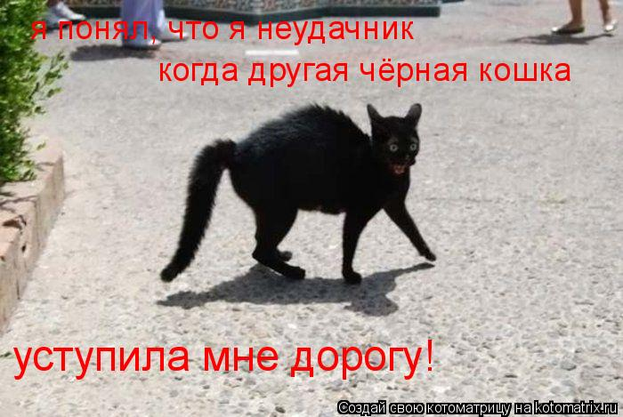 Котоматрица: я понял, что я неудачник когда другая чёрная кошка уступила мне дорогу!