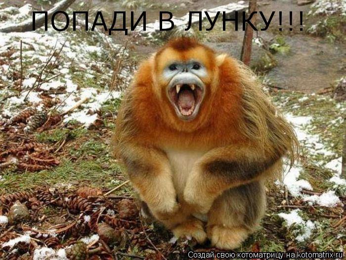 Котоматрица: ПОПАДИ В ЛУНКУ!!!