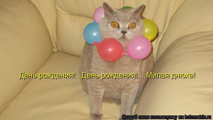Котоматрица: День рождения!...День рождения!.... День рождения!...День рождения!....Милая днюха!