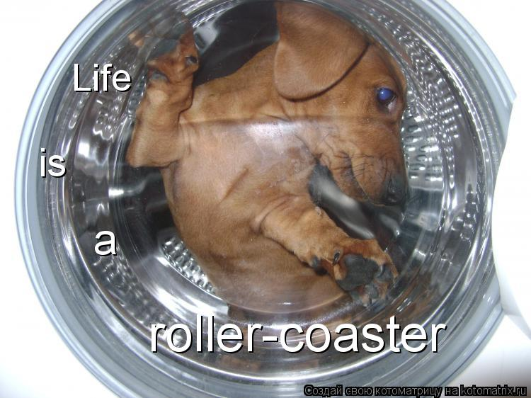 Котоматрица: Life  is a roller-coaster