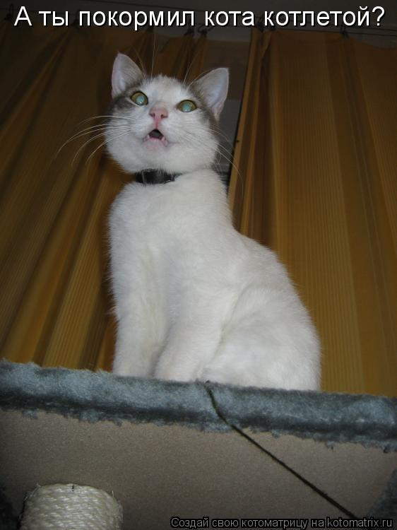 Котоматрица: А ты покормил кота котлетой?