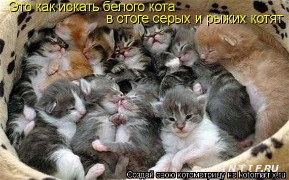 Котоматрица: Это как искать белого кота  в стоге серых и рыжих котят