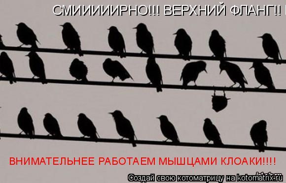 Котоматрица: СМИИИИИРНО!!! ВЕРХНИЙ ФЛАНГ!! ВНИМАТЕЛЬНЕЕ РАБОТАЕМ МЫШЦАМИ КЛОАКИ!!!! ВНИМАТЕЛЬНЕЕ РАБОТАЕМ МЫШЦАМИ КЛОАКИ!!!!