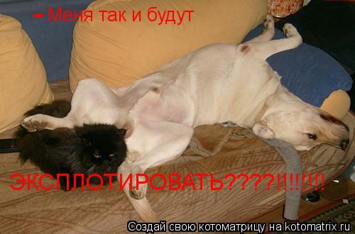 Котоматрица: Меня так и будут ЭКСПЛОТИРОВАТЬ????!!!!!!!! -