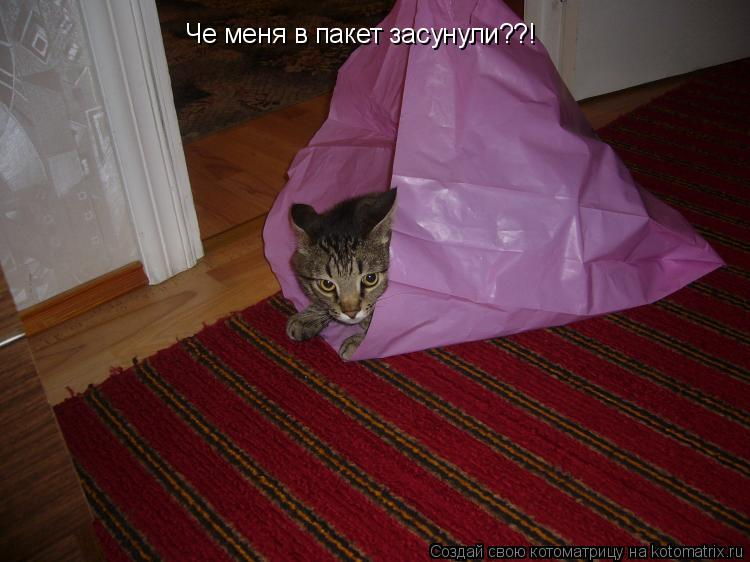 Котоматрица: Че меня в пакет засунули??!