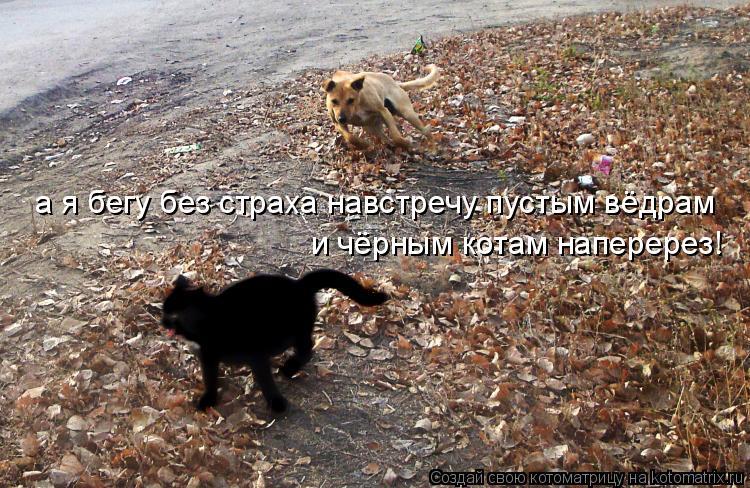 Котоматрица: и чёрным котам наперерез! а я бегу без страха навстречу пустым вёдрам