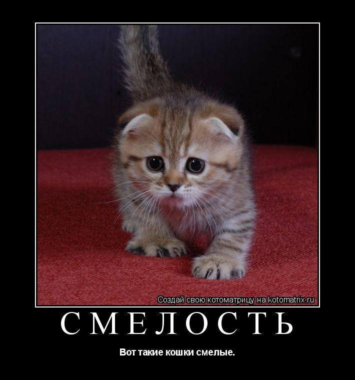 Котоматрица: СМЕЛОСТЬ Вот такие кошки смелые.
