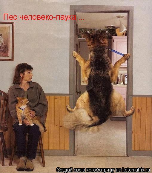 Котоматрица: Пес человеко-паука ...