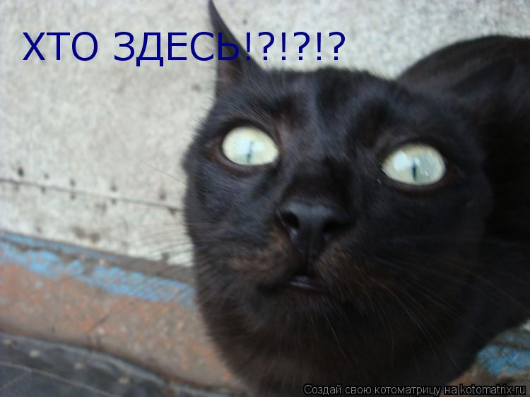 Котоматрица: ХТО ЗДЕСЬ!?!?!?