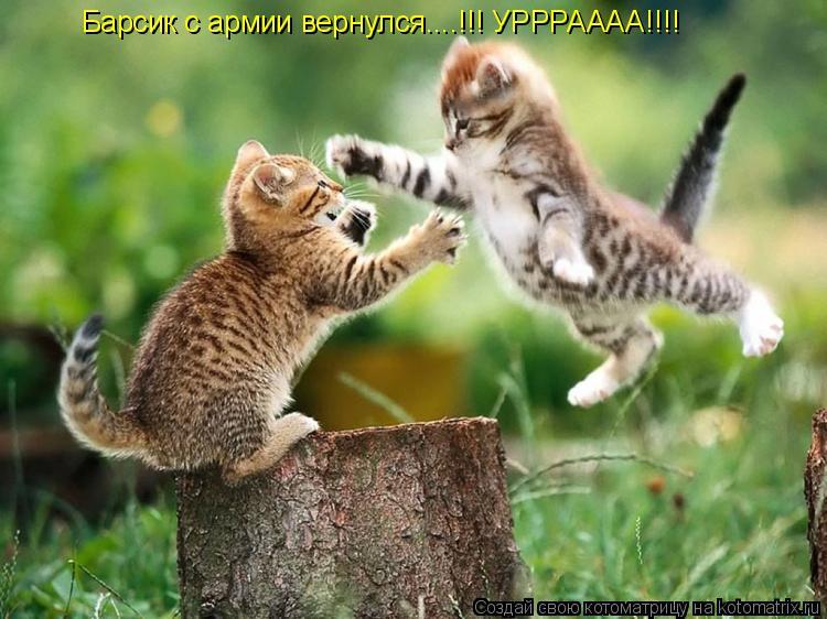 Котоматрица: Как рад я видеть вас коллега...за что зарплату вам повысили вчера ? Барсик с армии вернулся....!!! УРРРАААА!!!!