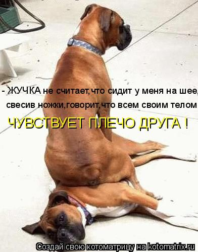 Котоматрица: - ЖУЧКА не считает,что сидит у меня на шее, свесив ножки,говорит,что всем своим телом ЧУВСТВУЕТ ПЛЕЧО ДРУГА !
