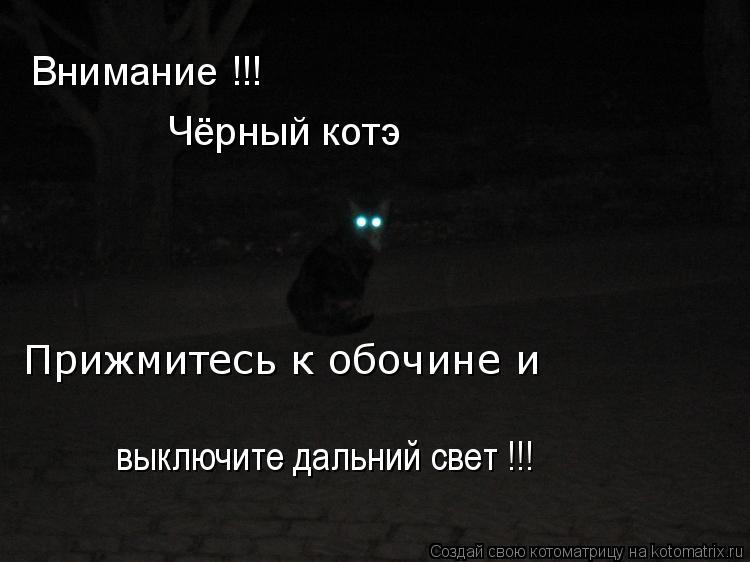 Котоматрица: Внимание !!! Чёрный котэ Прижмитесь к обочине и  выключите дальний свет !!!