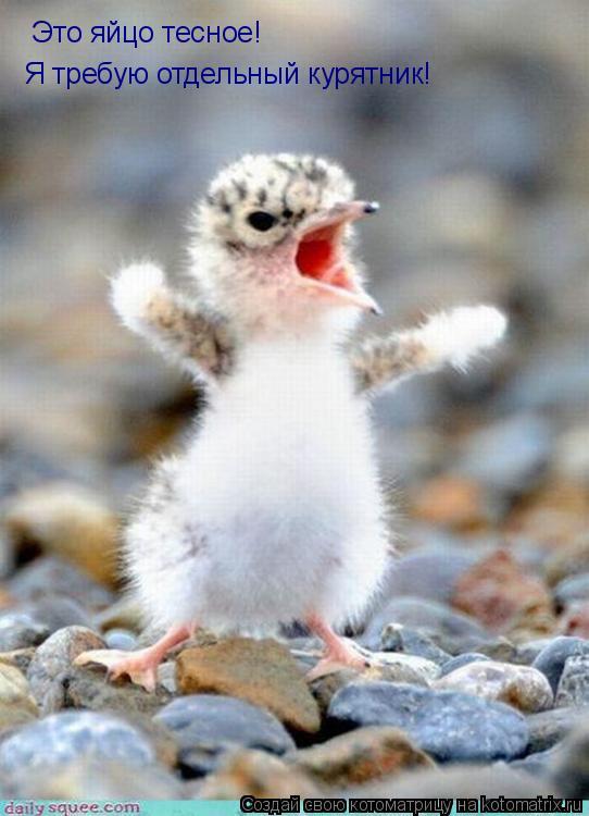 Котоматрица: Это яйцо тесное! Я требую отдельный курятник!