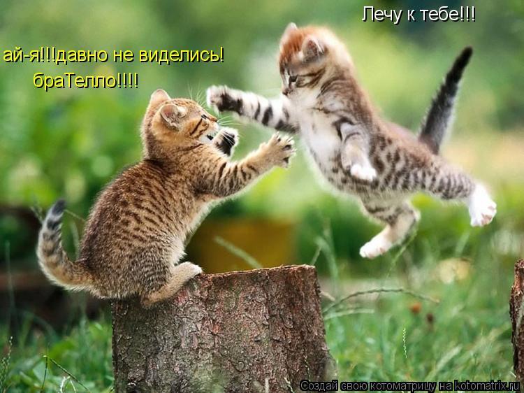 Котоматрица: Лечу к тебе!!! ай-я!!!давно не виделись! браТелло!!!!