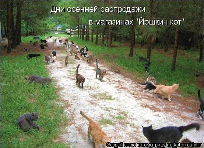 """Котоматрица: Дни осенней распродажи в магазинах """"Йошкин кот"""""""