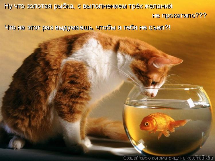 Котоматрица: Ну что золотая рыбка, с выполнением трёх желаний  не прокатило??? Что на этот раз выдумаешь, чтобы я тебя не съел?!