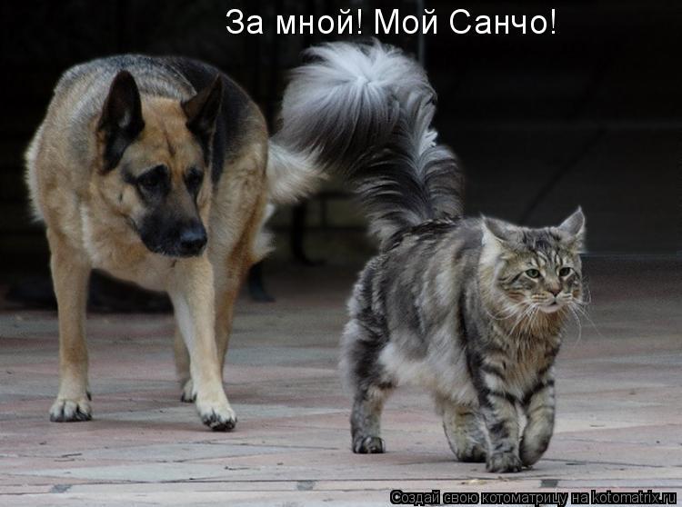 Котоматрица: За мной! Мой Санчо!