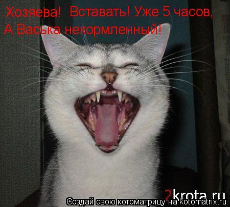 Котоматрица: Хозяева! Вставать! Уже 5 часов,  А Васька некормленный!