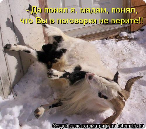 Котоматрица: - Да понял я, мадам, понял,  что Вы в поговорки не верите!!