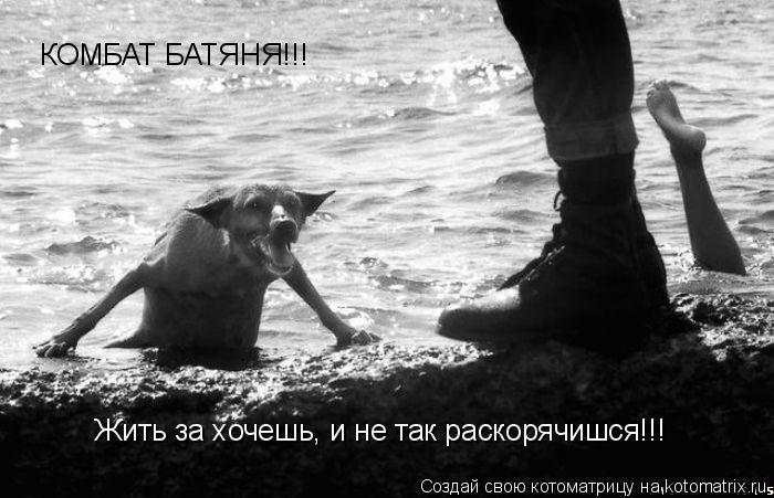 Котоматрица: КОМБАТ БАТЯНЯ!!! Жить за хочешь, и не так раскорячишся!!!