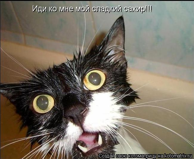Котоматрица: Иди ко мне мой сладкий сахир!!!
