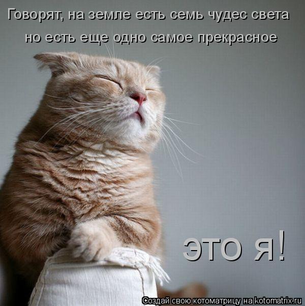 Котоматрица: Говорят, на земле есть семь чудес света но есть еще одно самое прекрасное  это я!