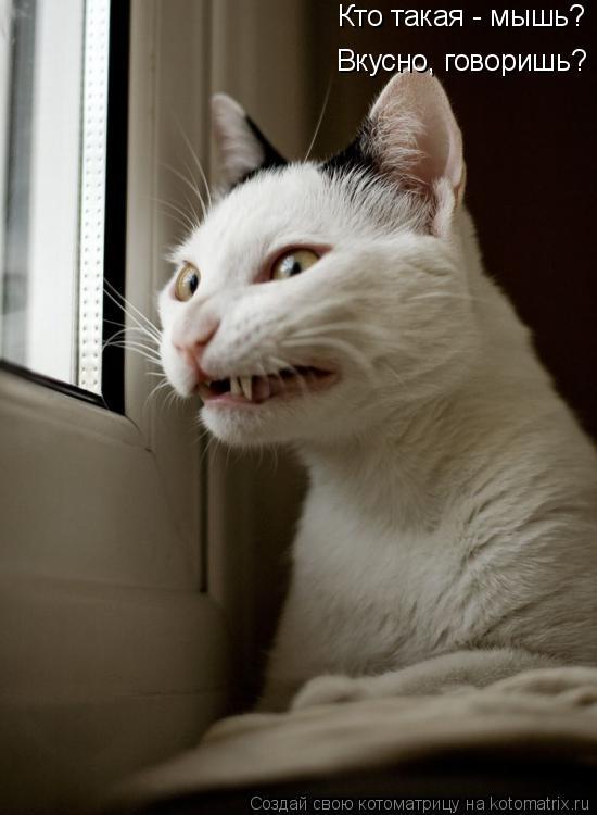 Котоматрица: Вкусно, говоришь? Кто такая - мышь?