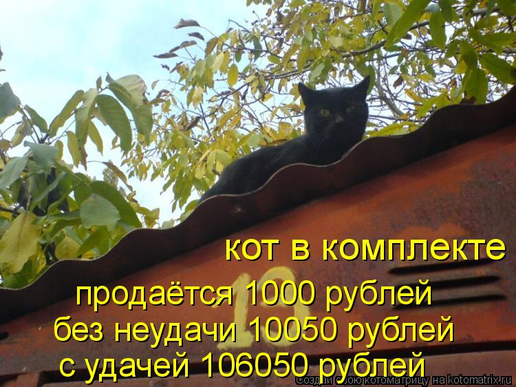 Котоматрица: продаётся 1000 рублей без неудачи 10050 рублей с удачей 106050 рублей кот в комплекте