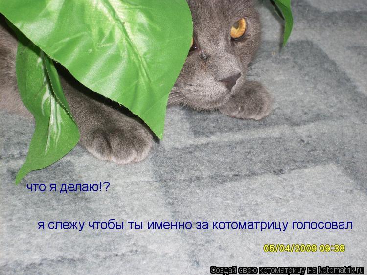 Котоматрица: что я делаю!? я слежу чтобы ты именно за котоматрицу голосовал