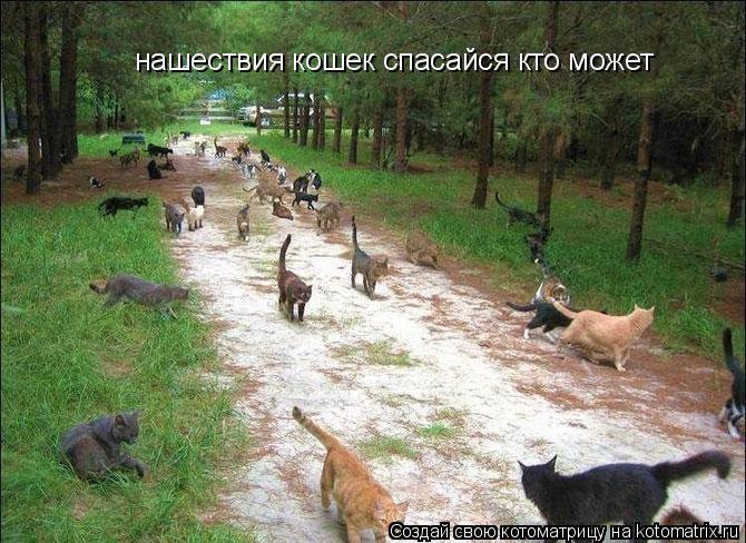 Котоматрица: нашествия кошек спасайся кто может