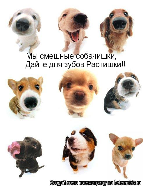Котоматрица: Мы смешные собачишки, Дайте для зубов Растишки!!