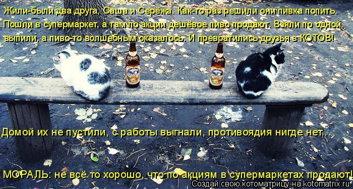 Котоматрица: Жили-были два друга, Саша и Серёжа. Как-то раз решили они пивка попить.  Пошли в супермаркет, а там по акции дешёвое пиво продают. Взяли по одн