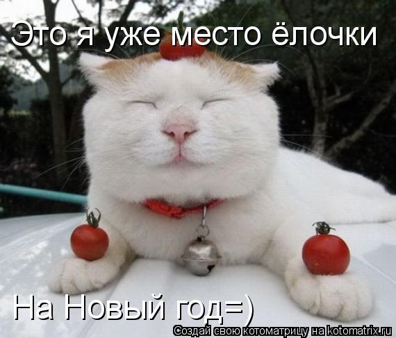 Котоматрица: Это я уже место ёлочки  На Новый год=)