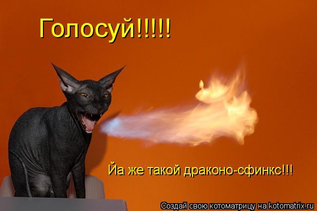 Котоматрица: Голосуй!!!!! Йа же такой драконо-сфинкс!!!