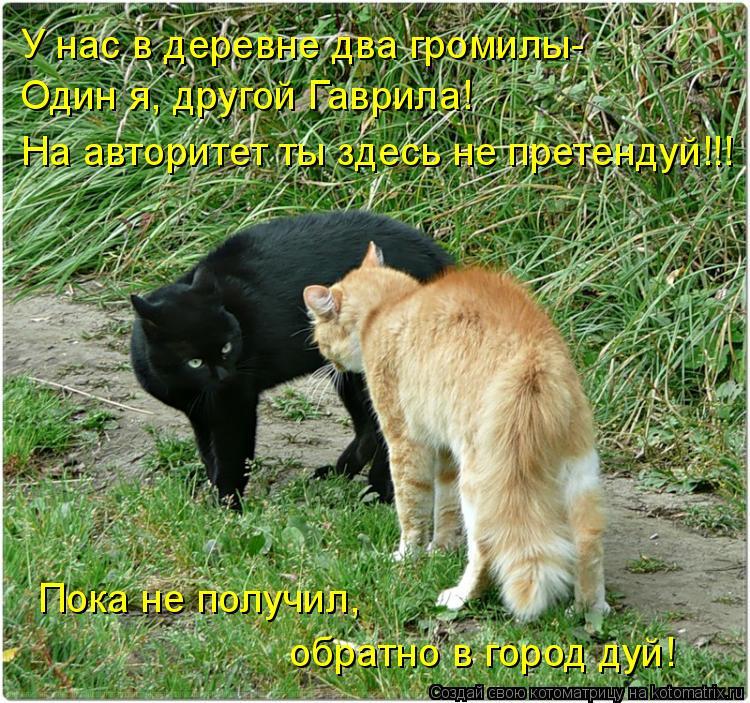 Котоматрица: У нас в деревне два громилы- Один я, другой Гаврила! На авторитет ты здесь не претендуй!!! обратно в город дуй! Пока не получил,