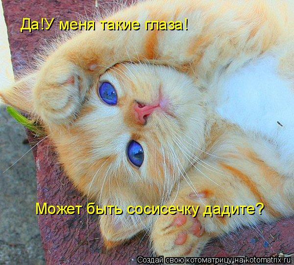 Котоматрица: Да!У меня такие глаза! Может быть сосисечку дадите?